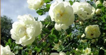 Лето - время цвести