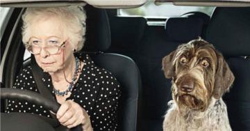 Стресс у собак и его коррекция