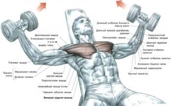 Как расширить грудную клетку и накачать мышцы груди