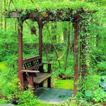 Вьющиеся растения для вашего дома