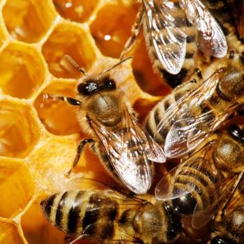 Пчелиный воск в Косметологии