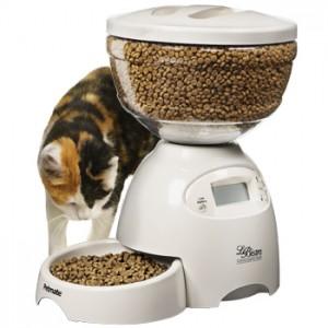 Когда сухой корм для кошек становится причиной болезни