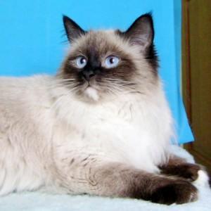 Почему кошки пропадают?